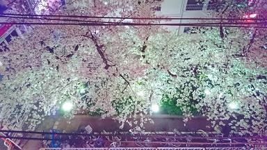 2017桜夜.jpg