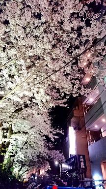 2017桜夜2.jpg